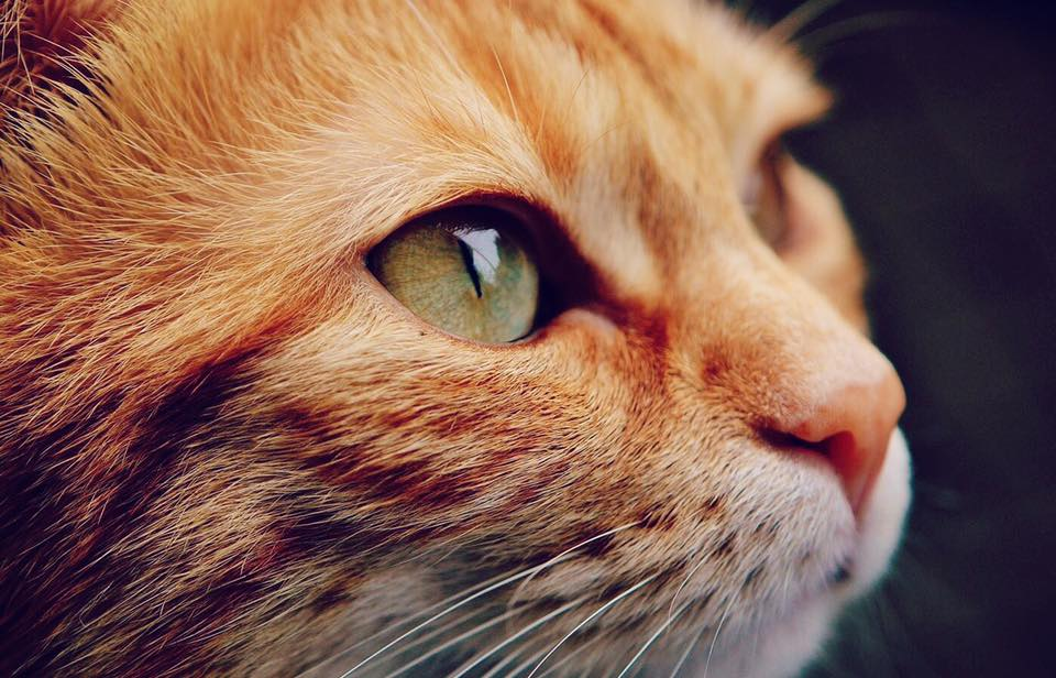 why you need a cat checkup