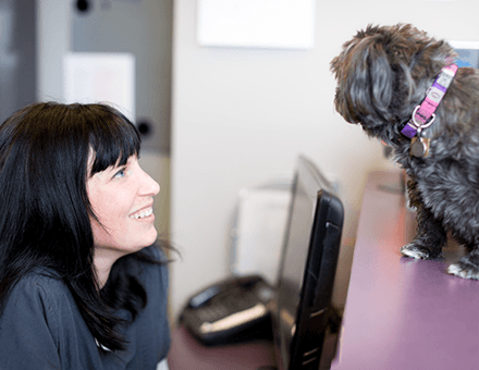 Front Desk Veterinary Clinic Ottawa