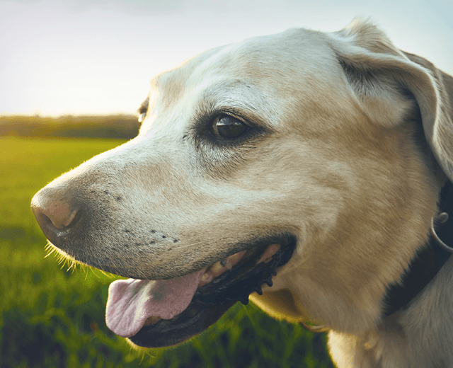 prevention of heartworm fleas and ticks