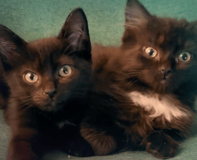 Ottawa Rescue Kittens Dunder and Mifflin