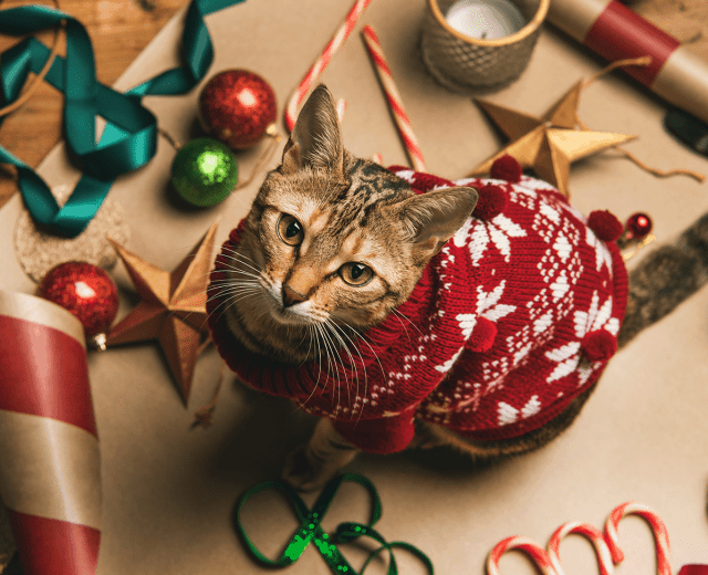 Merry Christmas from Fisher Glen Animal Hospital